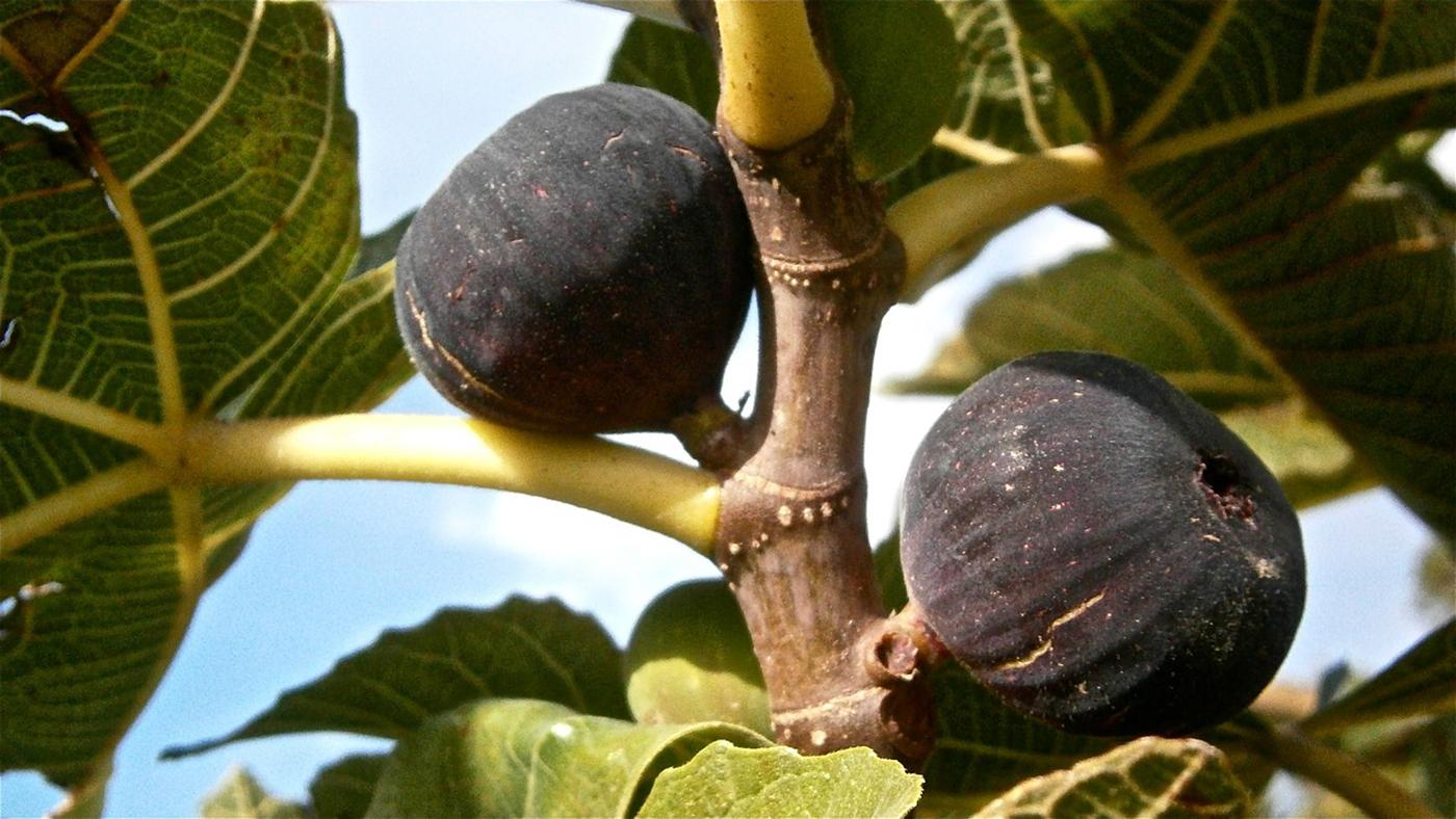 Vente directe producteur confitures en Drôme Provençale