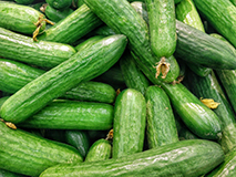 Fruits et légumes de Nyons : concombre