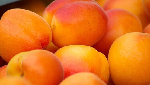Producteur d'abricot