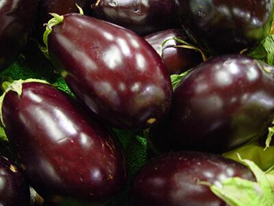 Producteur fruits et légumes : aubergines en Drôme Provençale