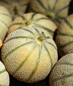 Producteur de Melons vers Nyons