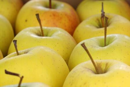 Producteur de pommes golden