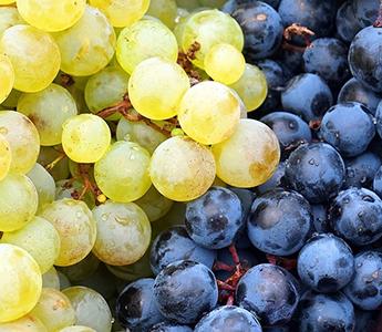 Producteur raisin en Drôme Provençale