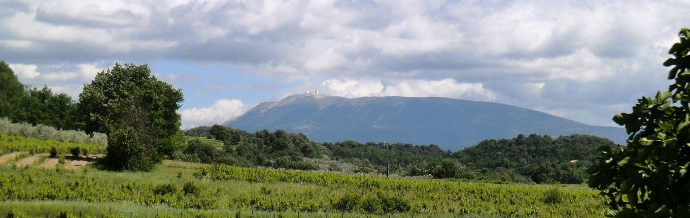 Vente de vin AOC Côtes du Rhône