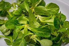 producteurs-salade-mache-mirabel