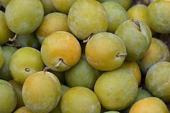 Produits locaux de Valréas : prune reine claude