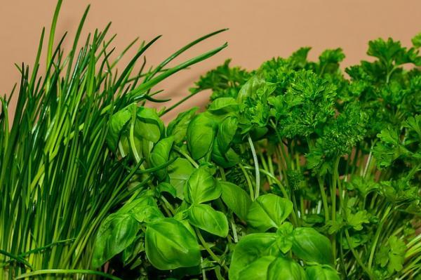herbes aromatiques du domaine des arches en drôme provençale